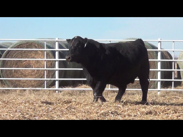 Express Ranches Lot 345