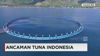 Ancaman Tuna Indonesia