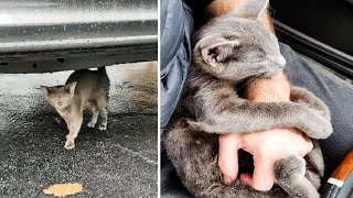Man Stops To Help A Kitten On The Road But When He Goes To Pick Her Up Realizes She's Glued In Place