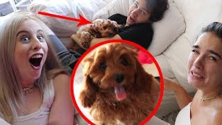 SURPRISING THEM WITH WORLD'S CUTEST PUPPY!!