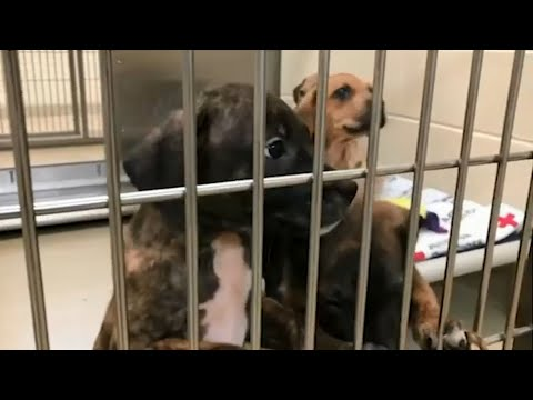 Orange County Animal Shelter Gains Custody Of 80 Dogs