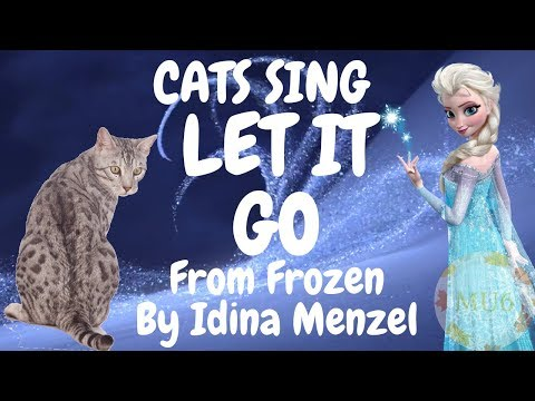 Cats Sing Let it Go from Frozen by Idina Menzel | Cats Singing Song