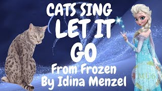 Gambar cover Cats Sing Let it Go from Frozen by Idina Menzel | Cats Singing Song