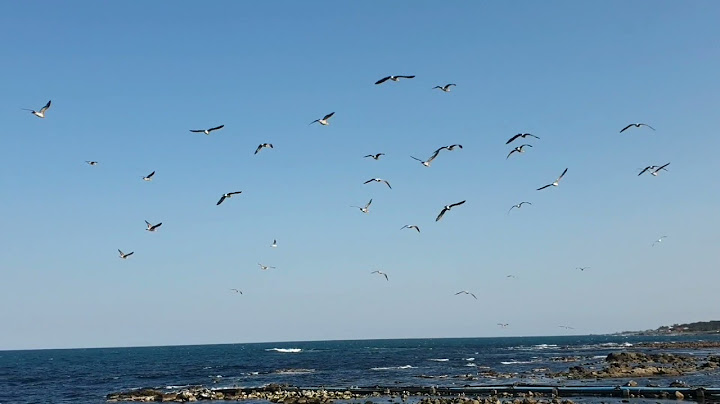 (힐링)  포항 호미곶 갈매기 춤추네