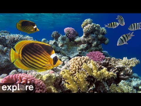 Cayman Reef Cam powered by EXPLORE.org