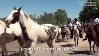 San Antonio de Areco, Buenos Aires, Argentine : Día de la Tradición