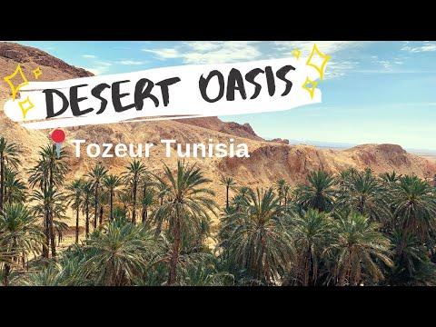TOZEUR TUNISIA - TOUR OF THE DESERT OASIS توزر (travel vlog 2019)