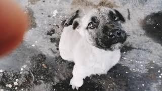 Истории моих собак Как они к нам попали