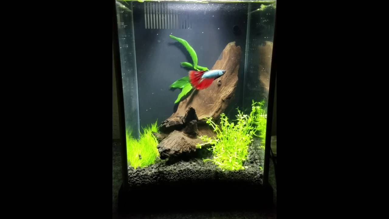 2 5 gallon fluval spec betta fish tank youtube for 2 gallon betta fish tank
