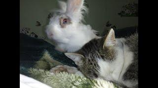 Кролик любит котика