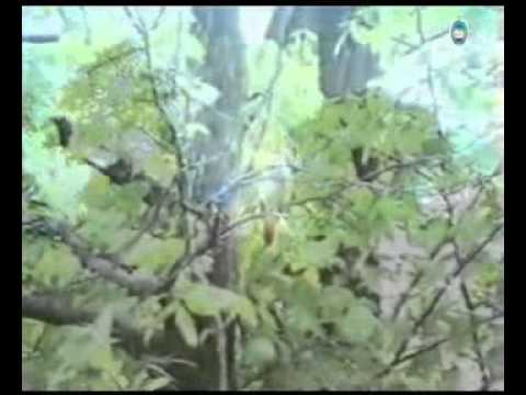 Святые Горы   Спаси и сохрани   Татьяна Снежина