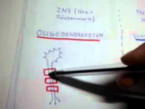 Nervengewebe: Markscheiden - YouTube