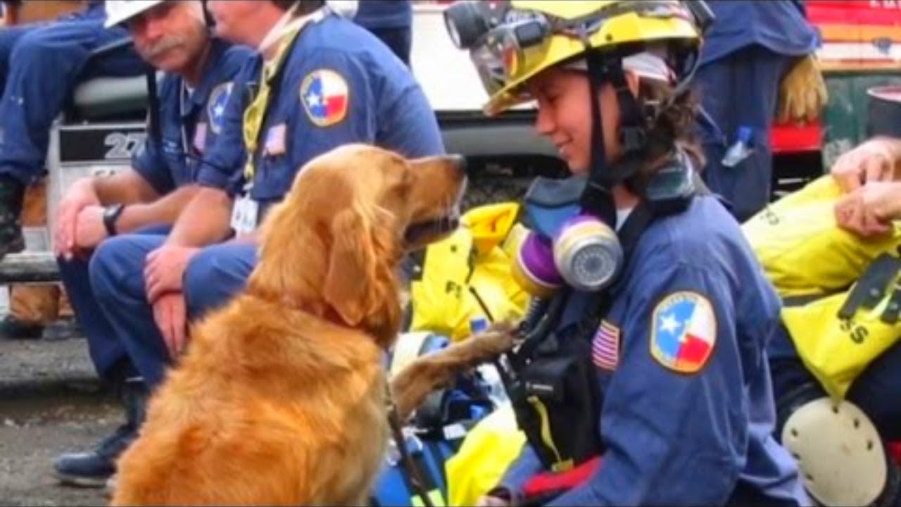 She's the Only Surviving 911 Rescue Dog So They Gave Her the Perfect Day For Her Birthday