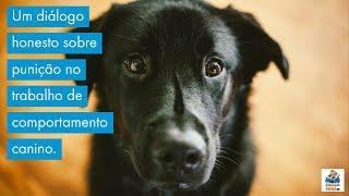 Um diálogo honesto sobre punição no trabalho de comportamento canino.