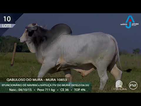 LOTE 10