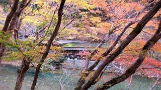 yajiさんの京都 秋の紅葉 清滝川 遊歩道 ①【Kyoto, Kiyotaki river hiking trail ①】
