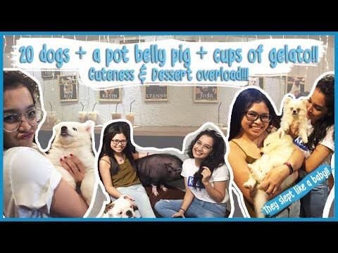galavlog:-20-dogs-and-a-pig-+-7-cups-of-gelato!!-|-wagging-tails-cafe-&-mio-gelati