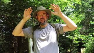 Wildnispfad Exkursion - Verschiedene Sehenswürdigkeiten im Wald (Teil 2 v. 2)