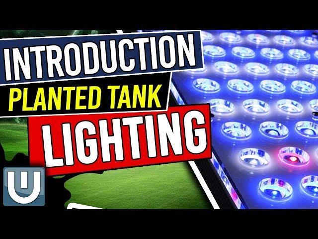 Planted Aquarium Lighting Guide - Introduction - Part 1