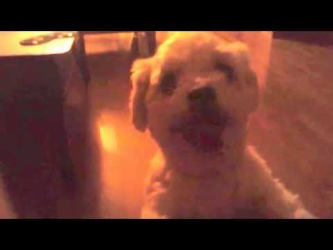 Dog with Reggae Music