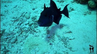 Sheraton Scuba Diving. Egypt, Sharm El Sheikh