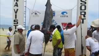 2014 Bisbee's East Cape Offshore Tournament | Nautahorse | 323lb Blue Marlin