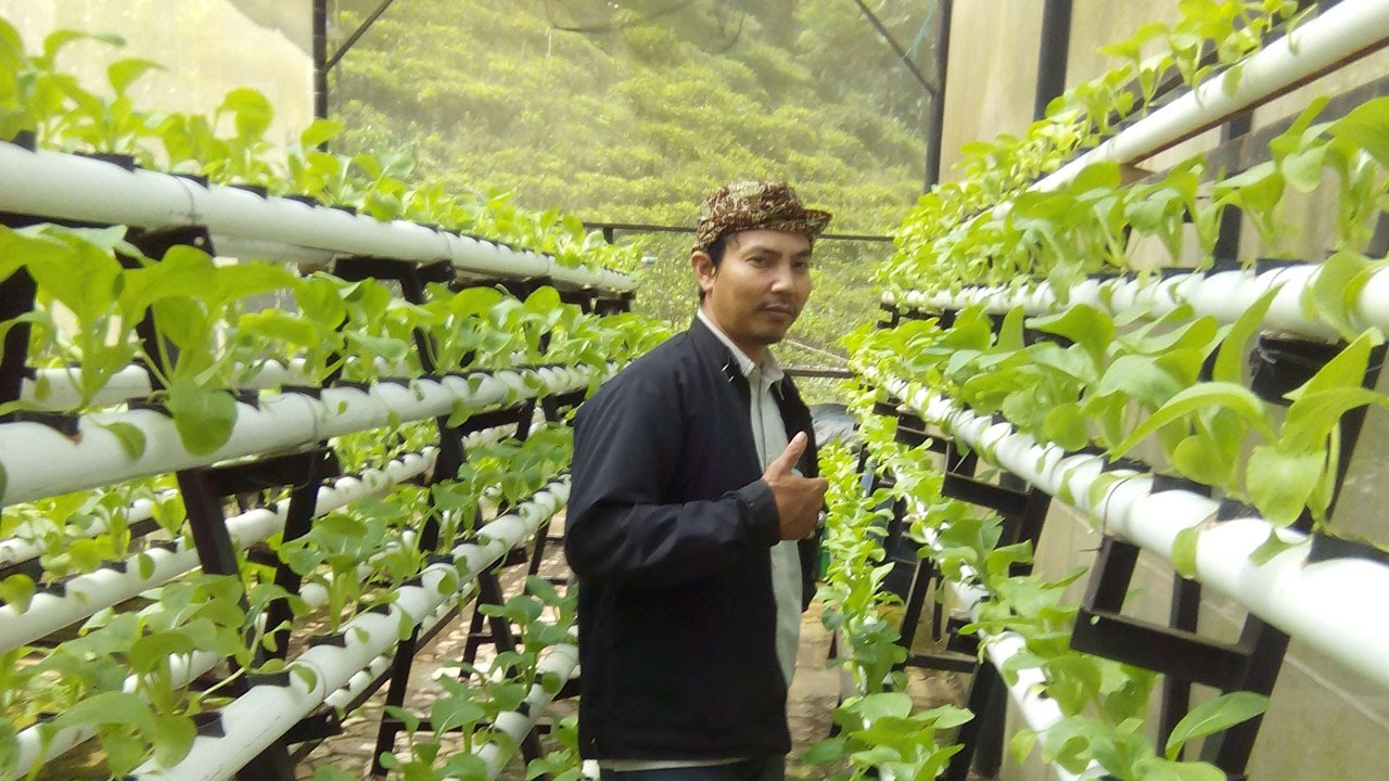 Hydroponic Vegetable Cultivation