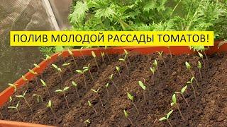 Как поливать под корень или в междурядья Ольга Чернова