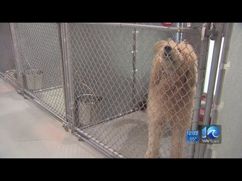 Lion Dog owner pleads guilty, receives provisions