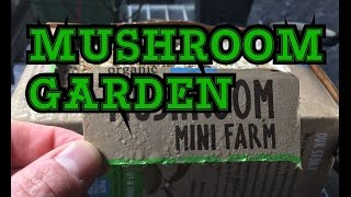 ORGANIC MUSHROOM GARDENING UPDATE DAY 3 & 6 THINGS ARE HAPPENING ON THE FARM PLUS WATERING TIPS
