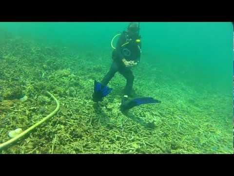 PADI DSD Scuba Dive with GoPro Hero2 and Blurfix