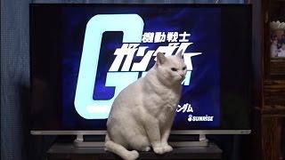 私と太陽(猫)はNHK総合に出演しました! Me and Taiyou (my cat) appeared in the largest television station in Japan! Я и Тайю (моя кошка) появились на...