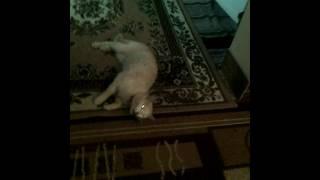 Действие желудочно кишечного чая на кота.
