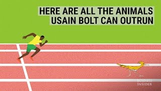 Showbiz: Celebrities | How Fast is Usain Bolt?
