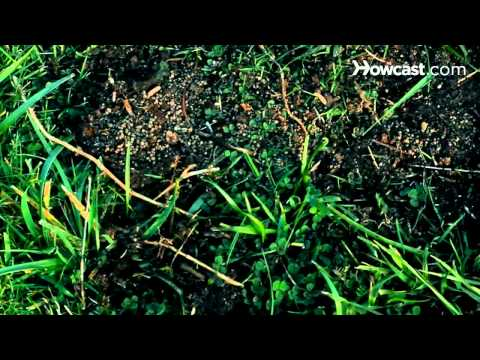 How To Get Rid of Crab Grass In The Lawn   FunnyDog.TV