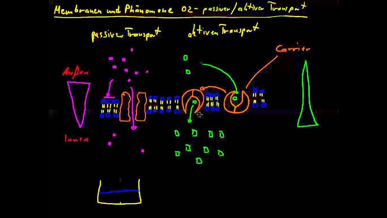 Membranen und Phänomene 02 - passiver und aktiver Transport - YouTube
