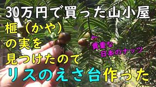 129.【リスのえさ台】庭に希少なナッツを見つけたので、エサ台を作りました。 30万円で買った山小屋(秘密基地)です。