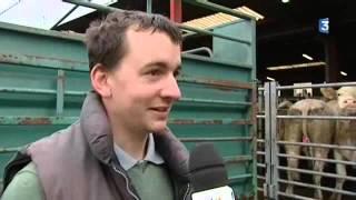 Nièvre : le marché au cadran de Moulins-Engilbert tourne au ralenti