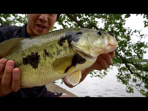 Urban Bass Fishing in Washington, DC - Lower Potomac River