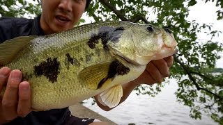 urban bass fishing in washington dc lower potomac river