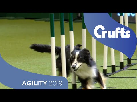 Agility Kennel Club British Open Final Part 2- Large | Crufts 2019