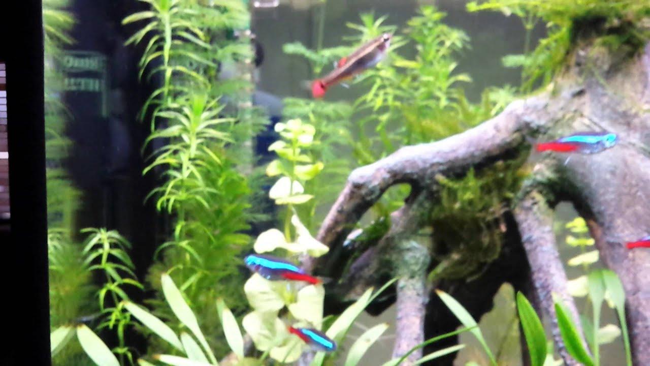 Superfish 30 led - YouTube