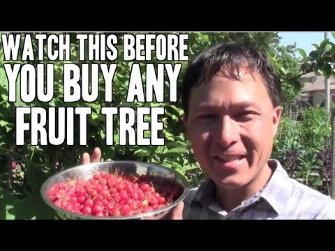 Watch this before you buy ANY FRUIT tree