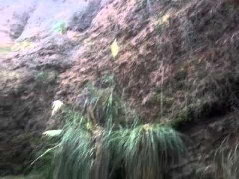 Quebrada de los helechos san juan youtube - Cuidados de los helechos ...
