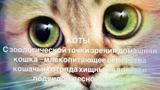 Все, что ты не знал о своём любимце!!! Энергия кошек.