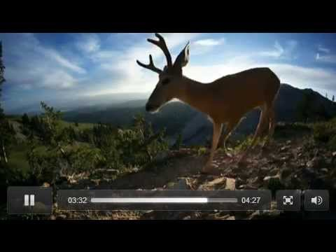 Mule Deer Migration