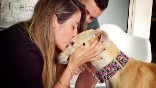 Download THIS DOG WAS NEVER KISSED IN HER ENTIRE LIFE... UNTIL TODAY Mp3 and Videos