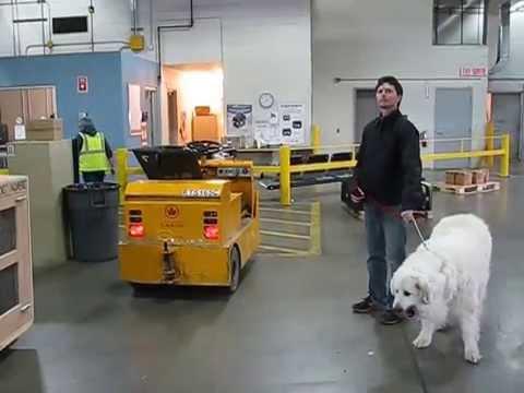 'Big Dog' At Toronto Air Canada Cargo Facility Before 8 Hour Flight To Lima