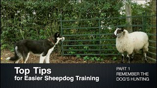 Top Tips for Sheepdog Training (Part 1) Remember the Dog's Hunting