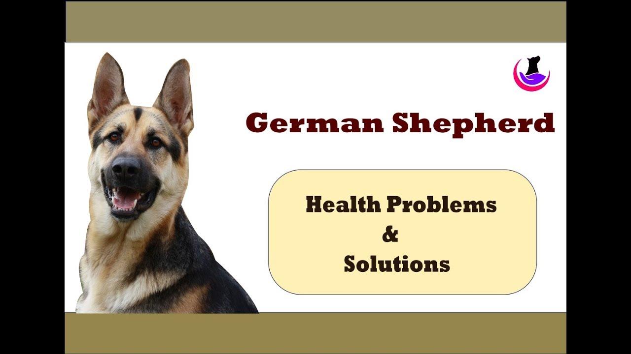 German shepherd dog health problems solutions in hindi youtube german shepherd dog health problems solutions in hindi nvjuhfo Gallery